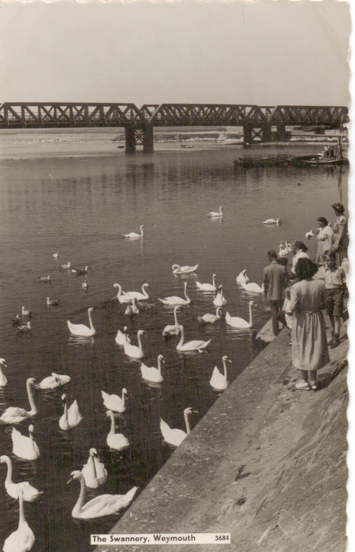 swannery Weymouth feeding swans 1950s
