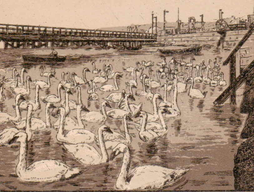 Weymouth swans on the Backwater pre 1900 weymouth booklet