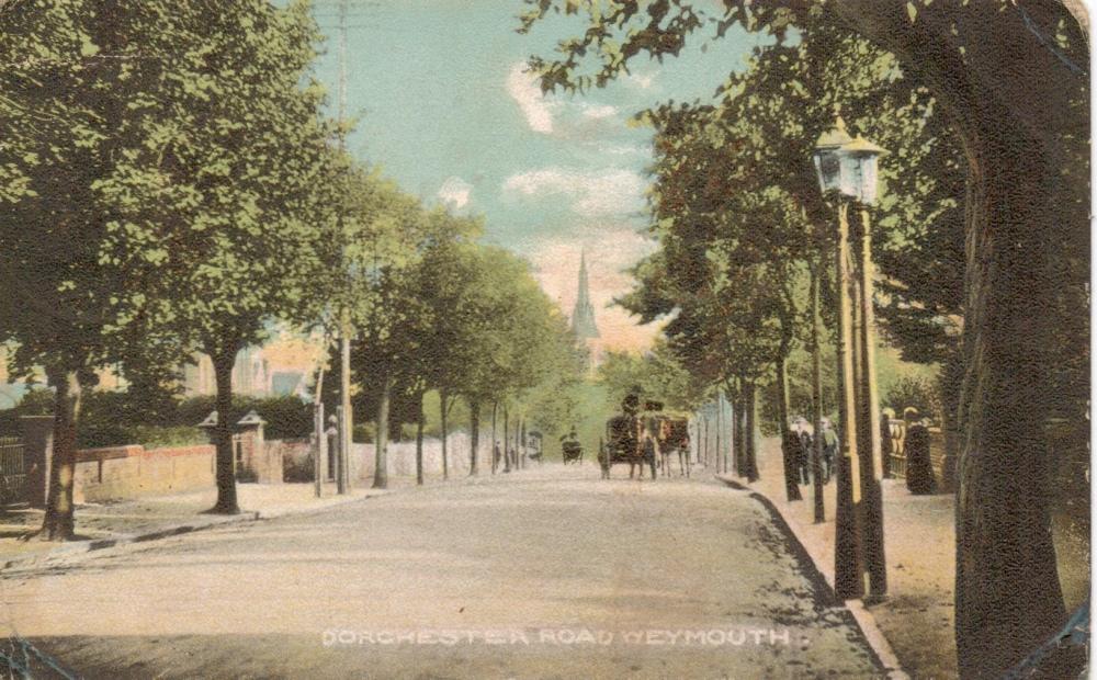 avenue trees dorchester road