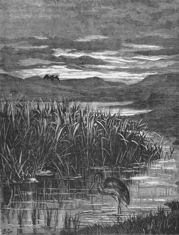 heron backwater quiver 1877