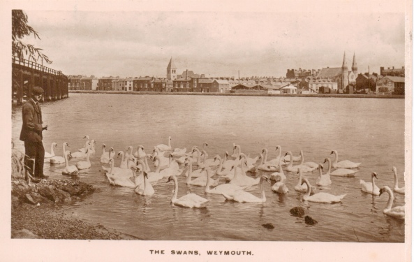 postcard-swannery-early